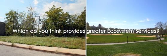 Which do you think offers more value to the ecological community? The billiard-style lawn of Central Park, or the wildflower patch on these vacant lots of Baltimore?