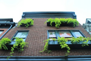 Green window boxes along Queen Street
